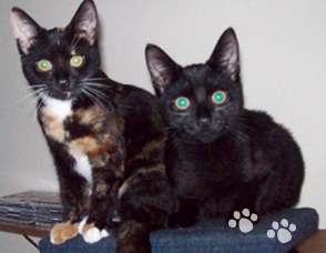 Spoilt Rotten Kitties - Pet Sitting Service Worthing