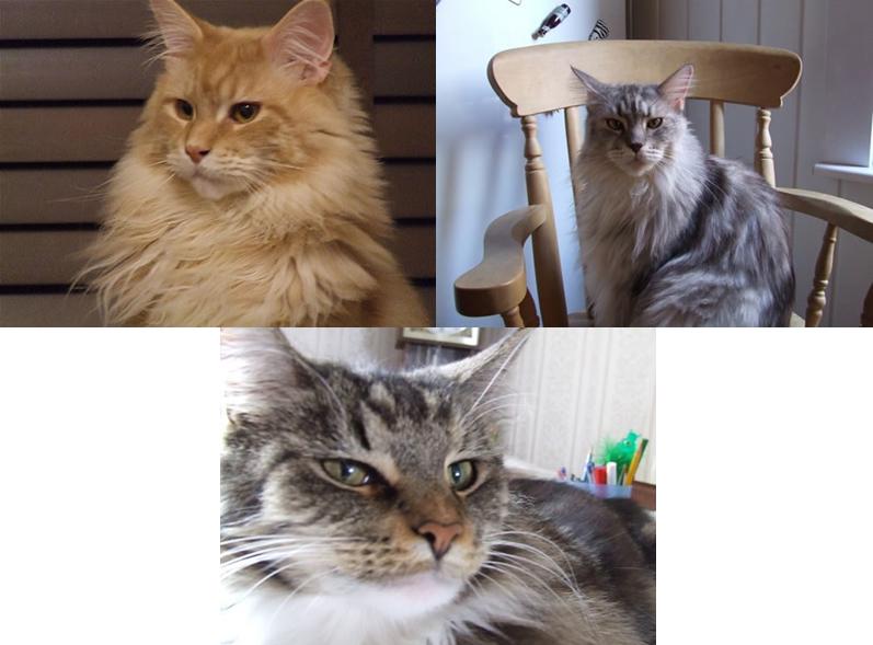 Aslan Maxi Kitty