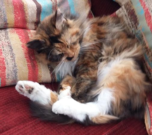 Poppy, Spoilt Rotten Kitties