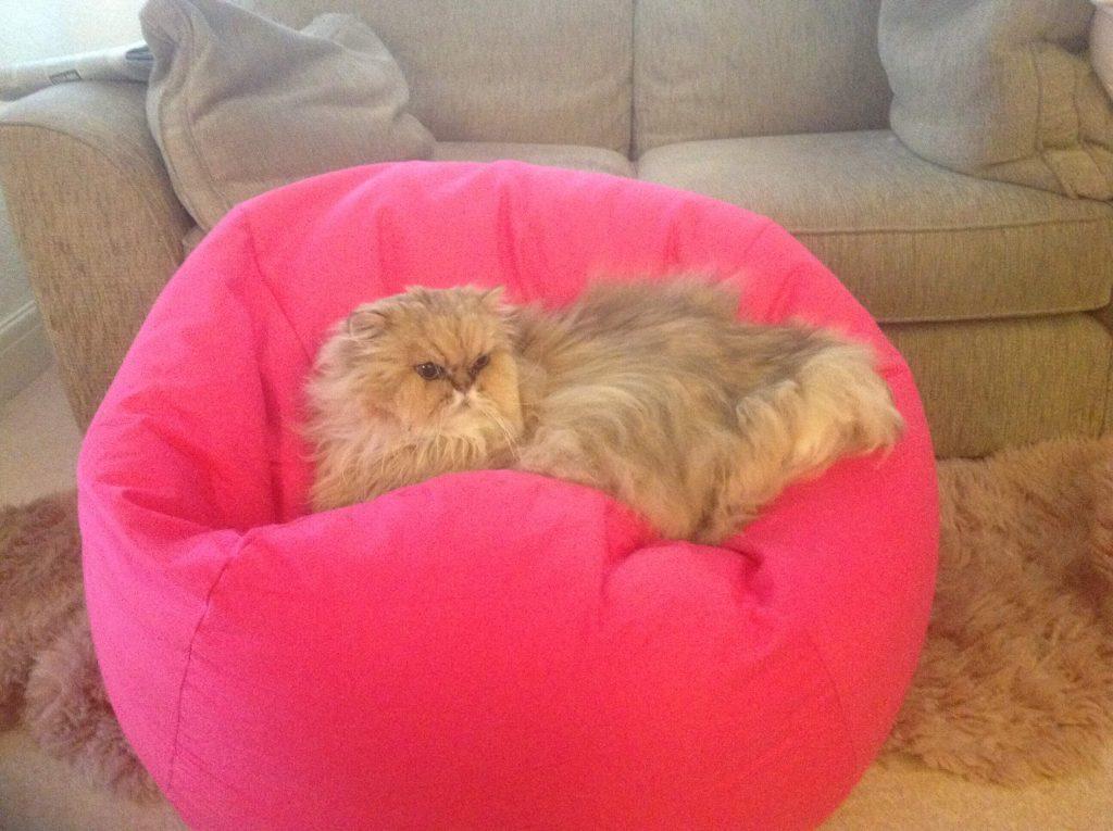 Mr Ted, Spoilt Rotten Kitties
